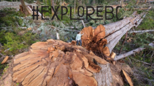 Old Growth Tourism